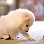 Pet stain removal in grand prairie
