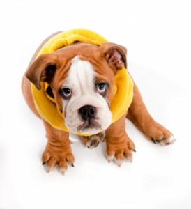 Your puppy is precious ... but those pet stains and odor he leaves on the carpet in your Richardson home aren't!